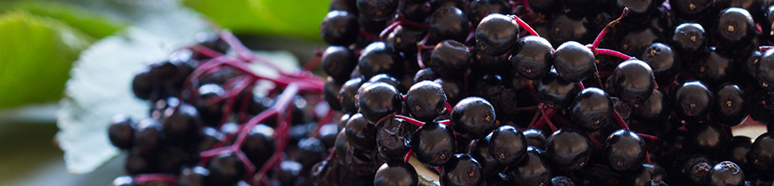 Elderberry Immune